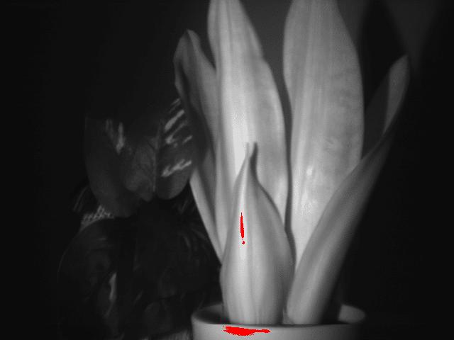 観葉植物と造花:750nm