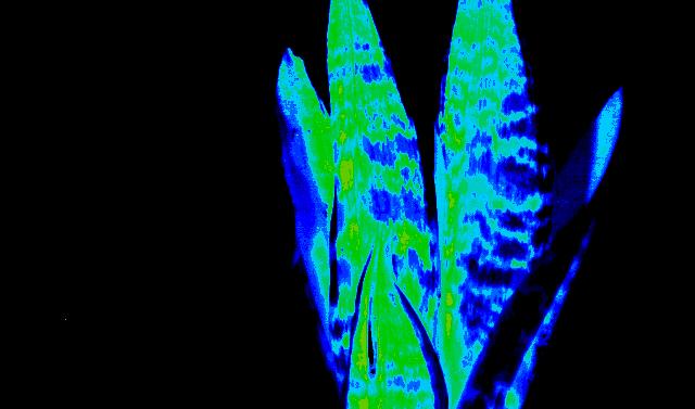 観葉植物と造花:NDVI解析