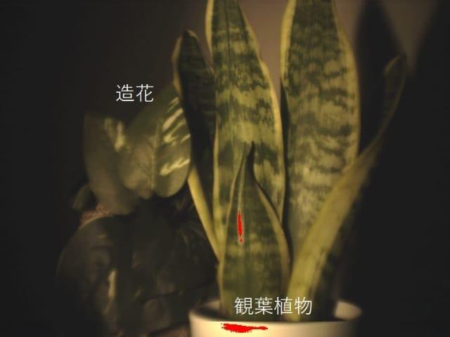 観葉植物と造花を使ったハイパースペクトルカメラの解析