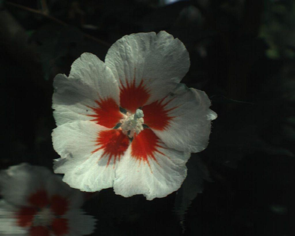 花スペクトルデータイメージ | 北海道衛星株式会社